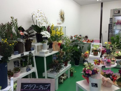 flower shop Cerisier